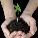 Inspirandrum ett frö som gror